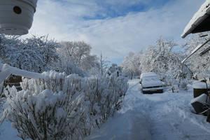 Moisakula winter 547 by MASYON