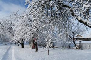 Moisakula winter 550 by MASYON