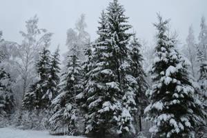 Winter 243 by MASYON