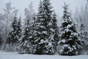Winter 244 by MASYON