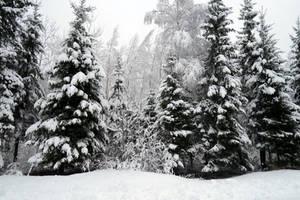 Winter 245 by MASYON