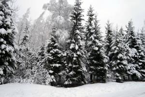 Winter 246 by MASYON