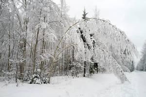Winter 247 by MASYON