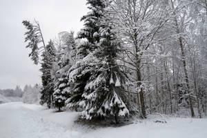 Winter 248 by MASYON