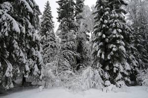 Winter 251 by MASYON