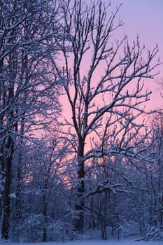 Winter 288