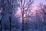 Winter 293