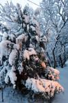 Moisakula winter 626