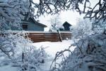 Moisakula winter 631