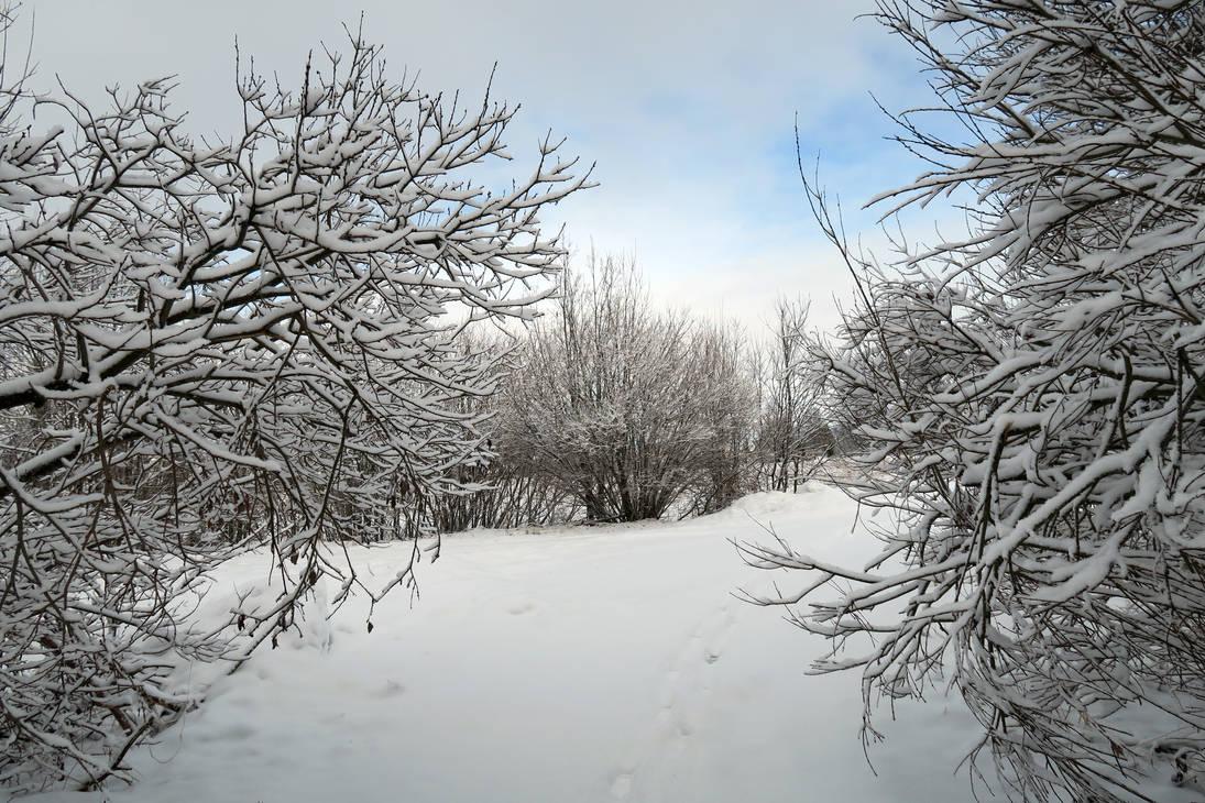 Winter 369 by MASYON