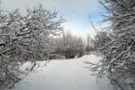 Winter 369