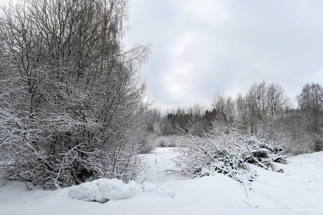 Winter 370 by MASYON