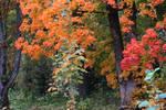 Autumn 620