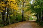 Autumn 776