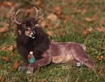 OOAK Posable Deer Doll