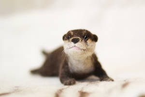 Needle Felted Otter - COMMISSION by azu-55