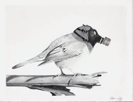 Bird of the future