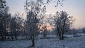 Cold morning 2