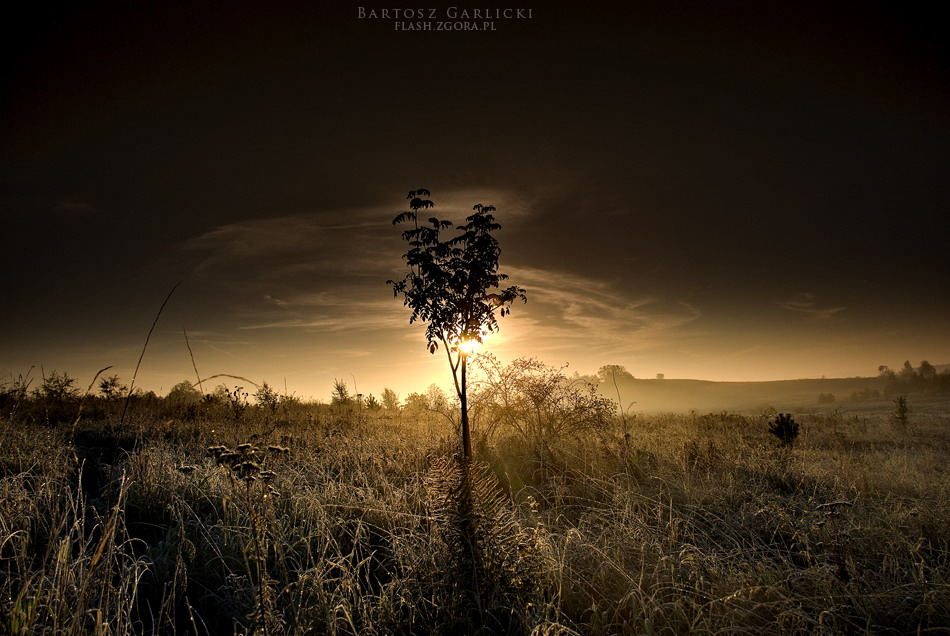 Alone by Malylol87