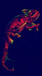 Chameleon by AYSAMO
