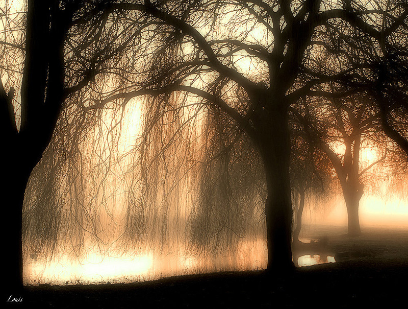 Arbres au petit matin by Louis-photos