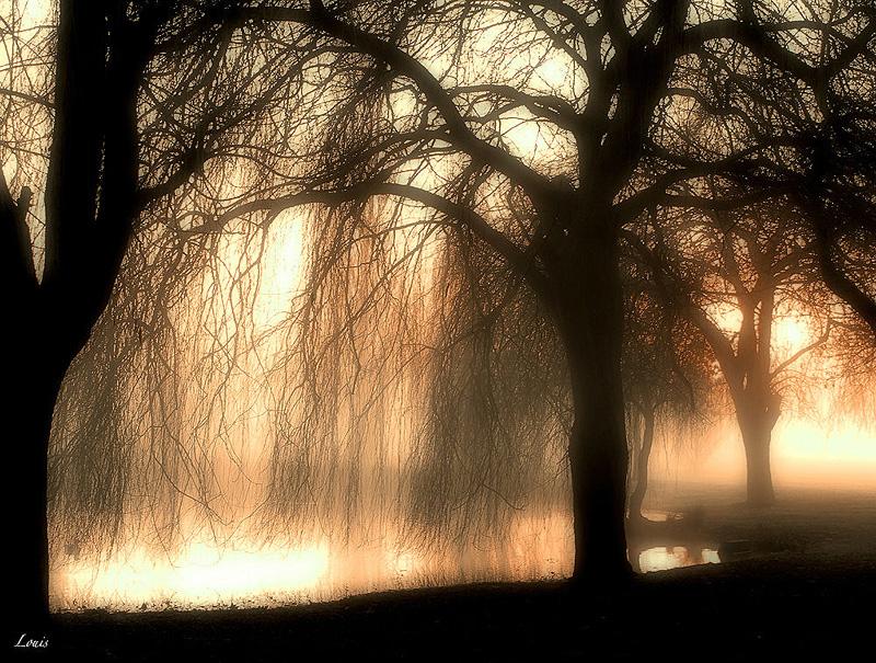 Arbres au petit matin by Louis-photos