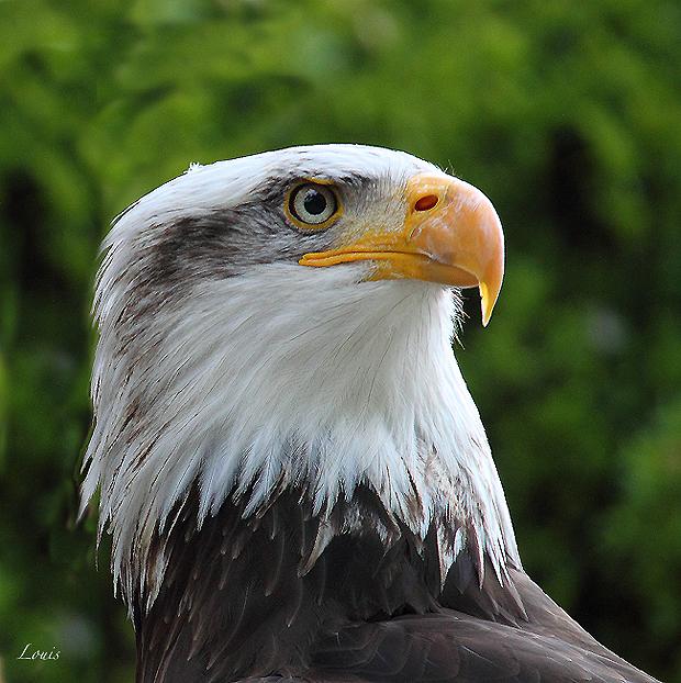 Bird by Louis-photos