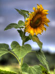 HDR - flower by Louis-photos