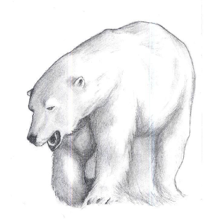 polar bear by oron28