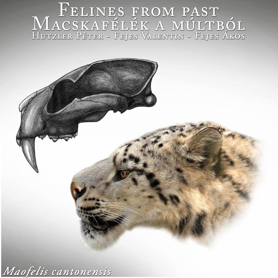 Maofelis cantonensis by Peterhutzler