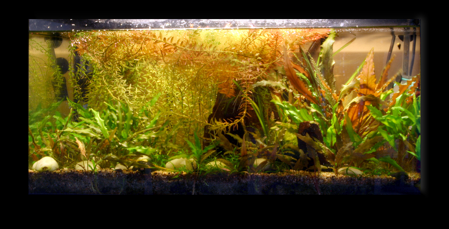 aquarium autonome. Black Bedroom Furniture Sets. Home Design Ideas