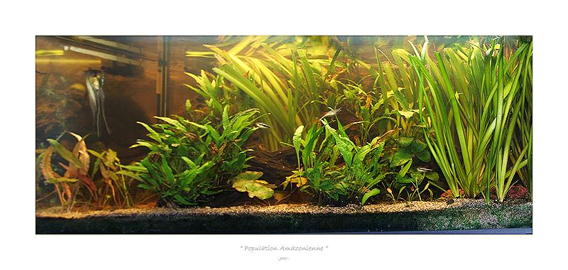 aquarium plante sans substrate. Black Bedroom Furniture Sets. Home Design Ideas