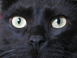 Black Cat by bluewave-stock