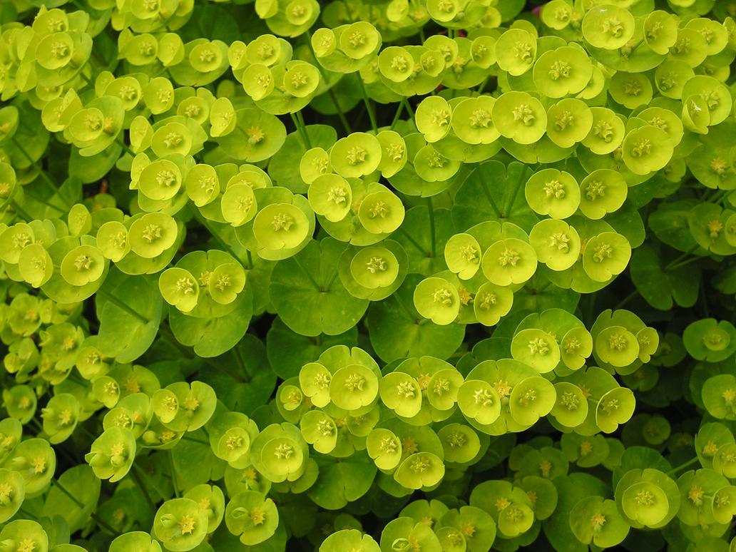 фото фоны растения