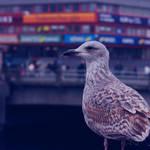 One very proud bird
