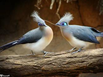 Love Birds by alucard07