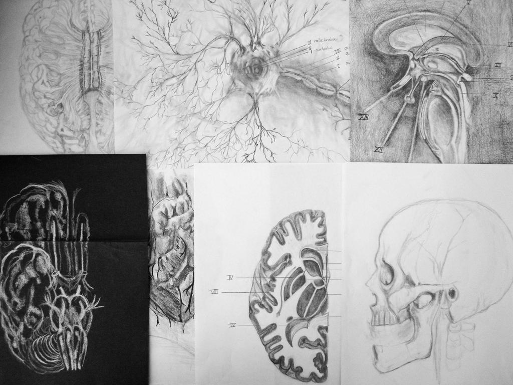 Medical school sketches by MercedesBouter on DeviantArt