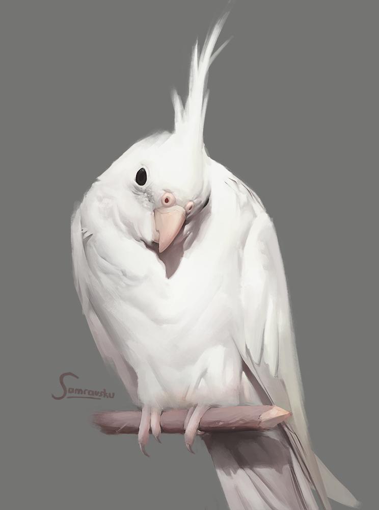 bird by Samrausku