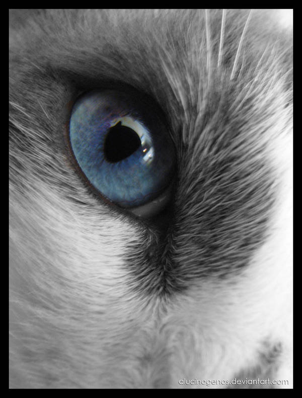 Horacio's eye by alucinogenos