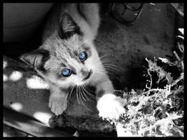 gato by alucinogenos