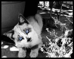 otro gato by alucinogenos