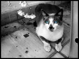 El Gato by alucinogenos