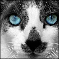 Deep Blue by alucinogenos