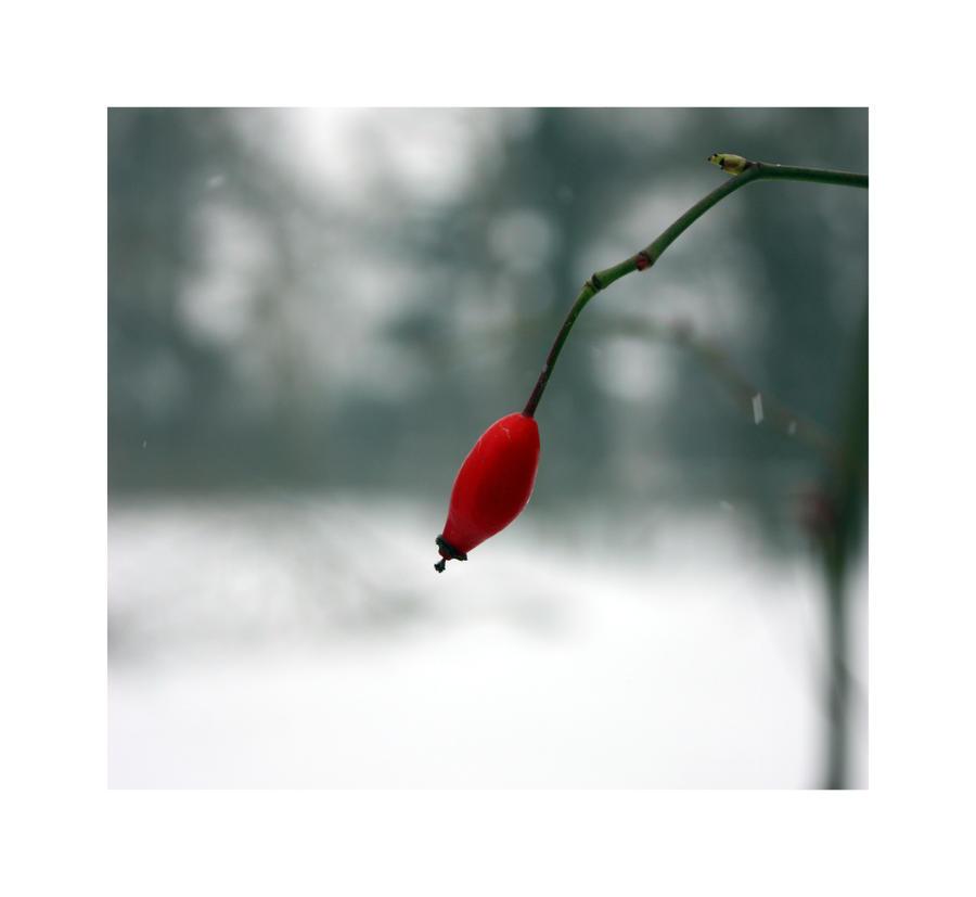 Le rouge et le blanc by freedom of on deviantart - Le rouge et le blanc ...