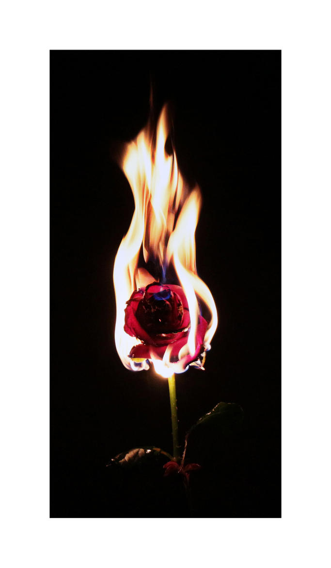 Fire flower by freedom of on deviantart - Flowers that mean freedom ...