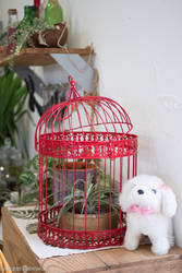 A Cage and The Dog by raveka