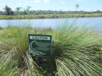 Caution Alligators