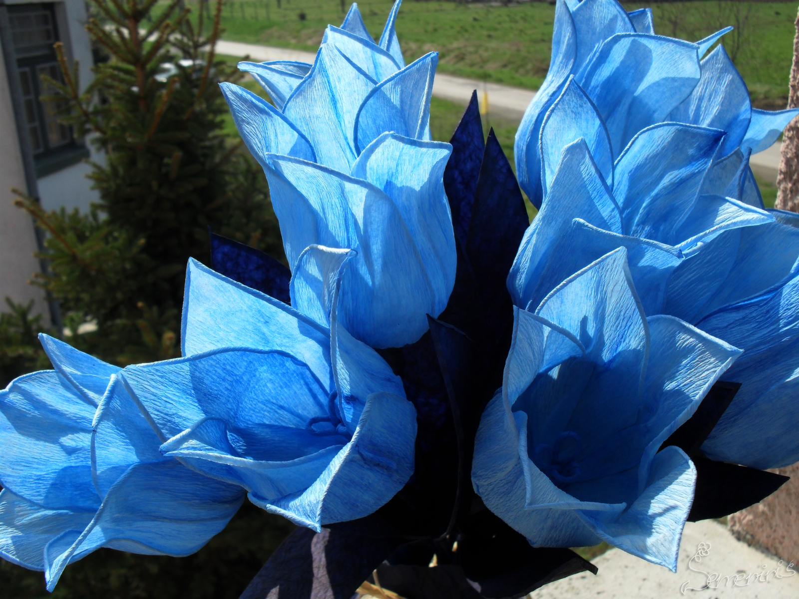 Blue tulips on our balcony by semeninis on deviantart for On our balcony