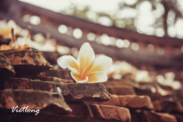 Plumeria on pagoda roof by juventus1304