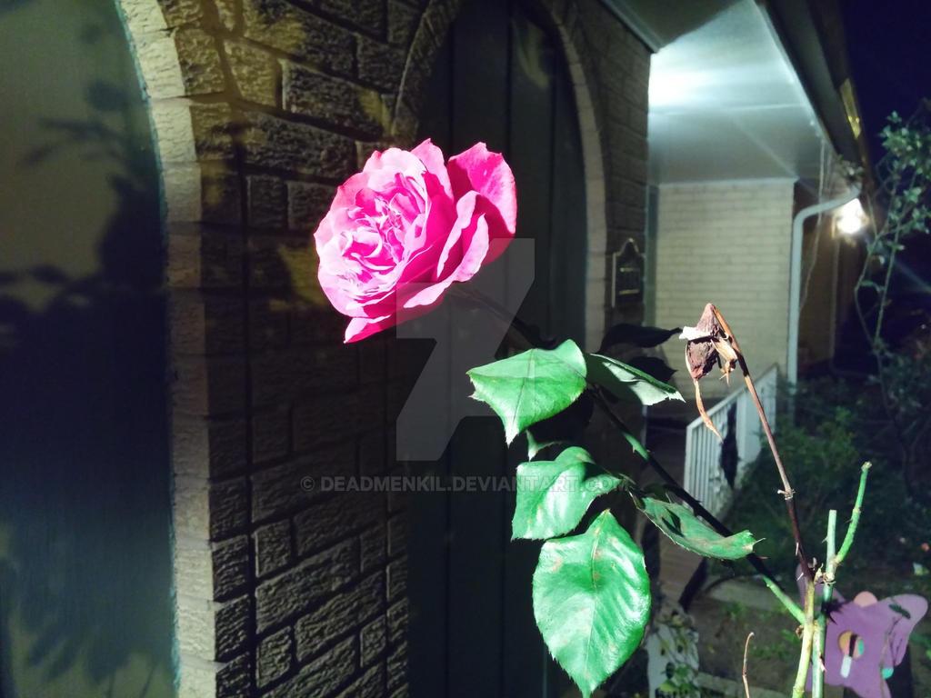 Night Rose by Deadmenkil